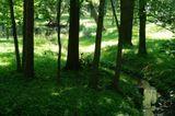 Моменты в Петергофе: ручей, озерцо и лужайка.
