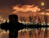 ночь волков, вольных как птицы в небе.    волки, отражение, дом, природа