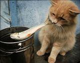 Кот минут 5 пытался украсть рыбу, не обращая внимания на окружающих. Вытащил таки...