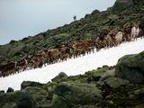 ...бредут спотыкаясь олени...