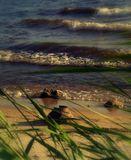 Горьковское море. Старый чугунок, случайная находка, теперь украшает клумбу в саду.