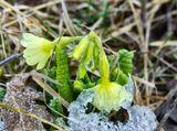 Весна заморозки