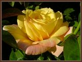 Просто красивый цветок :)