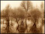 Деревья, разлив, весна