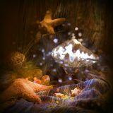 Техника светового пера ракушка морская звезда дно капли свет