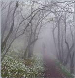 Окунаясь в туман, раствориться в тишине.