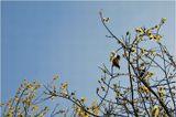 2 мая 2006 --- Песню О Любви Свободной, Воробей Чирикал В Мае, Ту, Которую Когда-То, Спел Нам Mercury... ;) Freddy Mercury - Exercises In Free Love