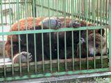 """Орловское полесье. Полуденный отдых, так сладко спит """"хозяин леса"""" и снится ему - свобода.Да, мечты мечты..."""