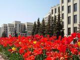 Минск весной.