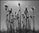 Мы люди словно семена,С небес на Землю Богом брошены,Им наша жизнь озаренаСреди плохого и хорошего.Не отрывайтесь от корней,Пытаясь вмиг достичь рассветаИ будет ваша жизнь полнейИ будет в кроне больше цвета.                           Т.Бражникова