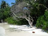 изумительный узор на песке от этого сухого дерева на морском берегу завораживает...по крайней мере мне так видится, а ВАМ?