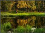 весна май Кошкин Дом болото дерево листва трава