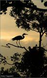 Липетск. Болото. Дерево. Цапли. Птенцы. Высота 15 метров. 10 июня в Спруте - полный репортаж об этой экстримальной фотосессии.