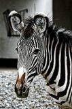 Берлин. Зоопарк. Май 2009...