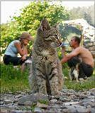 Коты с самого детства учатся быть самостоятельными. Особенно когда сыты.