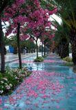 Дорожка, усыпанная лепестками цветов