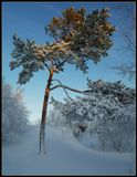 На побережье Белого моря, Архангельская обл. Утро, после снежного бурана... -26С Три горизонтальных кадра. Приятного просмотра, друзья!