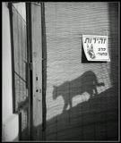 злая собака во дворе..