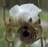 Это дикорастущий ирис. Растет в лесах возле города Назарет. Цветет в марте месяце.