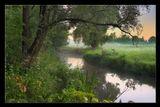 Солоницевка утро туман река дерево роса цветы Кошкин дом