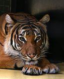 Привет из Берлинского зоопарка... снято через решетку