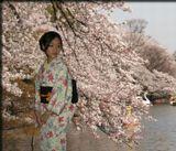 В Японии началось цветение сакуры. Хана-ми (любование цветущей сакурой) - любимый праздник японцев. Ежегодно Японское метеорологическое Агентство сообщает, когда начинают распускаться цветы во всех регионах. Праздник идёт по стране Восходящего Солнца!