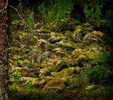 Мягкий ковер мхов и лишайников покрывает каменные осыпи Ладожских скал, придавая неповторимость северной природе