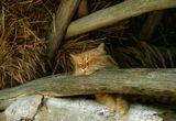 кот,лето,сеновал