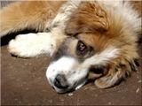 Как хочется ласки собаке бездомной... собака,животные