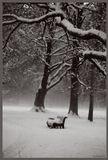 зима, ломоносов, ораниенбаум, парк, прогулки, разное, скамейка, дерево, снег, туман, холод, монохром, черно-белое, тропа, тропинка, жду, любовь,