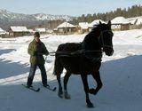 При определенной сноровке и тренировках можно кататься на лошади вот так. Желающим могу выслать рекомендации по экипировке и треннингам как лыжника так и лошади. :)