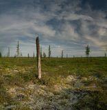 Типовая тундра. Снизу ягель, чуть выше- карликовые березки, осина и выжившие и не очень деревца покрупнее. Природа вытается вырасти за недолгий полярный день.Фото этого места http://www.lensart.ru/picture-pid-1a545.htm?ps=18 летом.