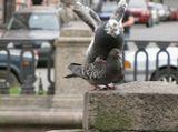 голуби в городе