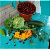 Дача, натюрморт, овощи и ягоды