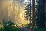 Вечером была гроза, за ночь тучи ушли, и утром на безоблачном небе взошло солнце... Земля, травы, цветы, деревья обильно напоённые теплым дождем, начали отдавать влагу... и в лесу образовался туман!