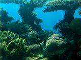 Снято в солнечный день на глубине 6 метров в Красном море
