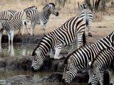 путешествия,Африка,сафари