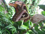 Фото бабочки с портретом на крыльях
