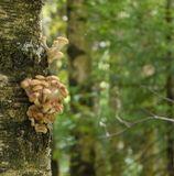 В этом году в Подмосковье грибов было мало.Уже кончается август, полетела паутина. Скоро осень... И вот подошла первая волна осенних опят.Этот гриб растет с июля по октябрь по всей территории России большими группами в лесах, садах, на живых и погибших деревьях, пнях, корнях, буреломе. По обилию плодовых тел превосходит все съедобные шляпочные грибы.~~~Panasonic Lumix DMC-G1+G-Vario 14-45 ISO 400; f/5,6; 1/20; F=90 мм ЭФР