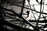 в ветвях - в витках сиралей мысли.