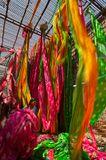 Местность в Индии где красят шелк