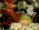 египет, кораллы
