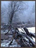 Идет сильный мокрый снег. Ранние утро. Кавказ.