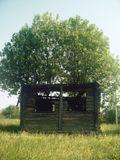Вача, дом, дерево, куръёз