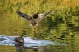 Крылья, шасси, приводнение.