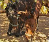 Первый снимок из коротенькой серии про очень породистых лошадок...