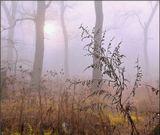 Осень, утро, туман...