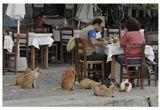 Ужин молодой пары в портовом ресторане городка Моливос на острове Лесбос (Греция). Октябрь 2008
