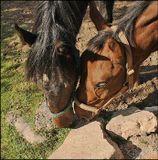 Третий снимок из серии  про взаимоотношения двух породистых Лошадок..Будет ещё один, как Они со мной прощались..:-))