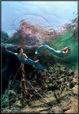 """Подводное фото.Красное море. Остров """"Big Brother""""июль 2009"""
